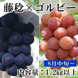 【クール便】藤稔・ゴルビー1.2Kギフト