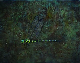 Dragonfly�