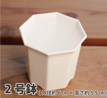 八角2号鉢(白)