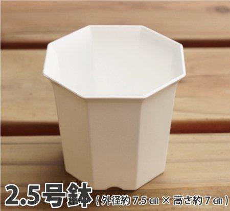八角2.5号鉢(白)