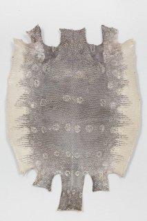 トカゲ革/Lizard(ナチュラル)L-78