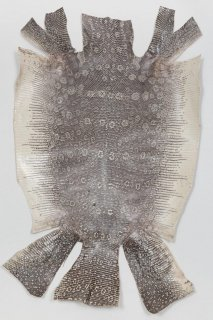トカゲ革/Lizard(ナチュラル)L-73