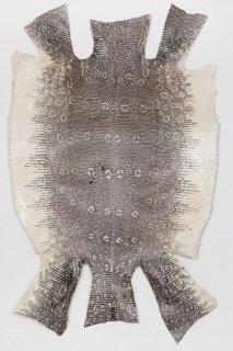 トカゲ革/Lizard(ナチュラル)L-50