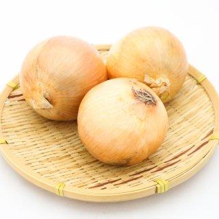 九州産 新玉葱