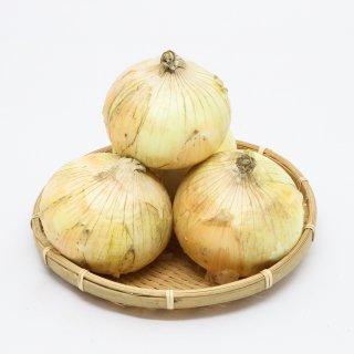 佐賀産 玉葱