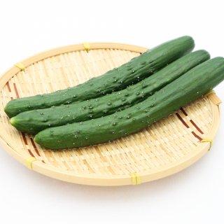 九州産 胡瓜