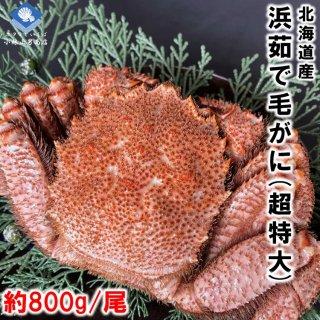 【20%OFF中】 浜茹で毛がに 北海道産 約800g 超特大サイズ 堅ガニ 1尾入 条件付き送料無料