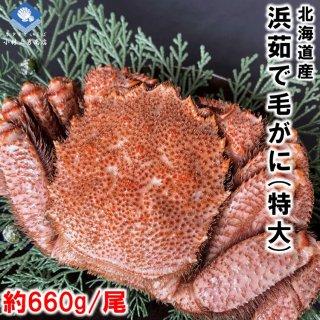 【20%OFF中】 浜茹で毛がに 北海道産 約660g 特大サイズ 堅ガニ 1尾入 条件付き送料無料
