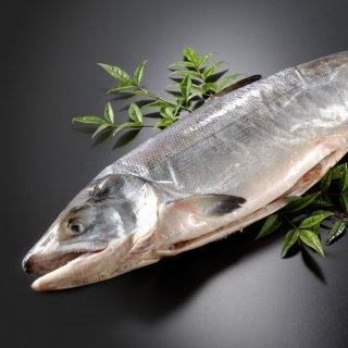 <水産物応援商品>北海道産 新巻鮭一本物 約4.0kg 送料無料 #元気いただきますプロジェクト