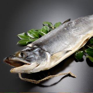 <水産物応援商品>北海道産 新巻鮭寒風干し一本物 約2.0kg 送料無料 #元気いただきますプロジェクト
