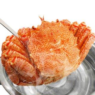 北海道産 ボイル毛がに 特大約500g×2杯