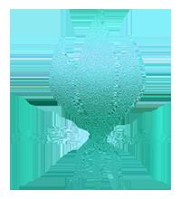 starlily design