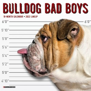 WillowCreek Bulldog Bad Boys ブルドッグ【ミニ】