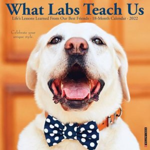 What Labs Teach Us カレンダー