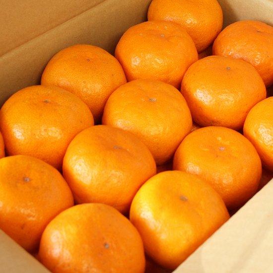 ゆら早生 上 Mサイズ 4.5kg 果実個数 約42個(11/10以降順次出荷予定)