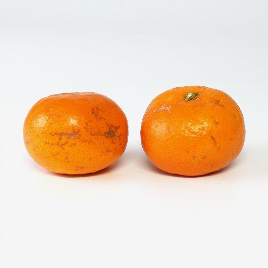 ゆら早生 ワケアリ 2S〜2Lサイズ 4.5kg 果実個数おまかせ(11/10以降順次出荷予定)