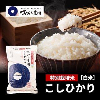 特別栽培米 コシヒカリ 【従来品種】