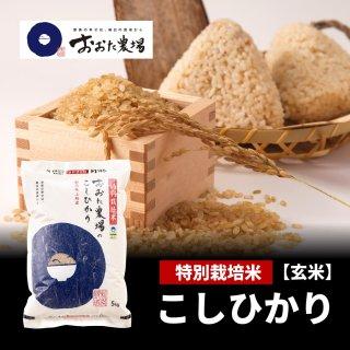 玄米 特別栽培米 コシヒカリ 【従来品種】