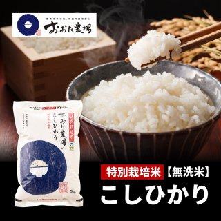 無洗米 特別栽培米 コシヒカリ 【従来品種】