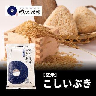 玄米 こしいぶき