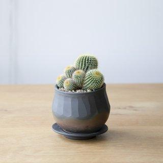 [一点もの] 〈植物〉金晃丸 + 〈鉢〉常滑焼 玉光陶園作 火窯変植木鉢(サンリットオリジナル商品)