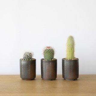 [一点もの] 〈植物〉サボテン + 〈鉢〉常滑焼 猪飼護 作 赤土切立鉢