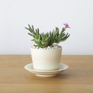 [一点もの] 〈植物〉美鈴 + 〈鉢〉常滑焼 三好史織作 釉薬鉢 極小(サンリットオリジナル)