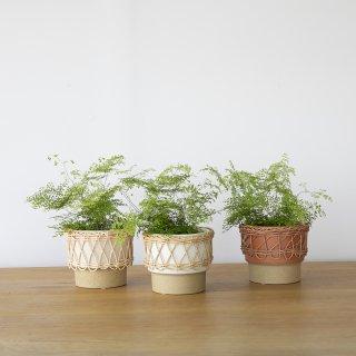 〈植物〉アジアンタム・ミクロフィラム + 〈鉢カバー〉イーネス 10