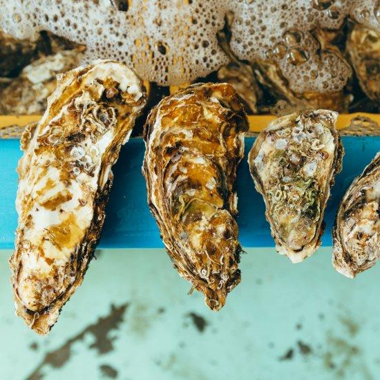 豊洲市場で「日本一」獲得!岩手三陸の特大牡蠣 15個