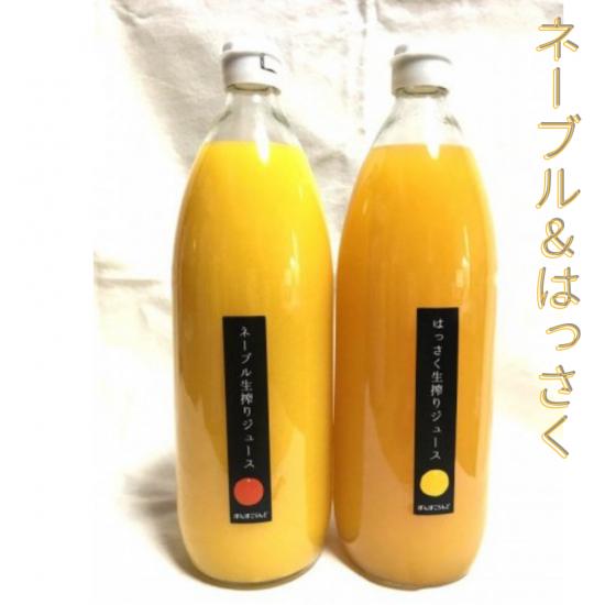 柑橘生搾りジュース2個セット(ネーブル、はっさく)