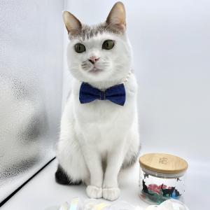 首輪  /  犬猫  /  まるでパールのネックレス  /  リボン2色有り
