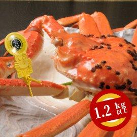 越前ズワイガニ 1番ガニ(1.2kg以上)