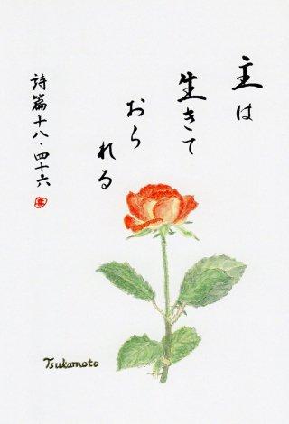 聖句画ハガキ 第2集