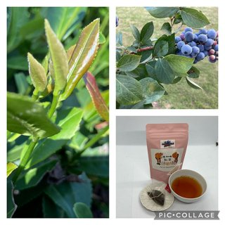 ティーパックブルーベリー葉入紅茶  3g×10個テトラパック入