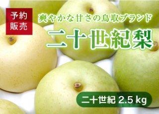 【予約・数量限定(送料無料)】二十世紀梨 3kg(7〜9玉/1箱)