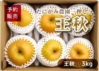 【予約・数量限定(送料無料)】甘くて大きい!王秋梨 3kg(5〜6玉/1箱)