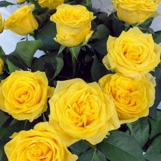 季節のお花 バラ 黄