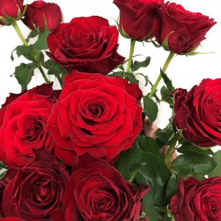 季節のお花 バラ 赤