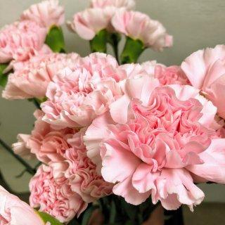 季節のお花 カーネーション ピンク