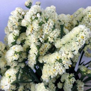 季節のお花 スターチス 黄色系