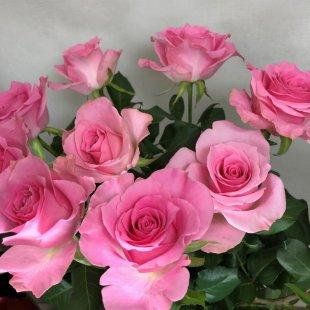 季節のお花 バラ ピンク