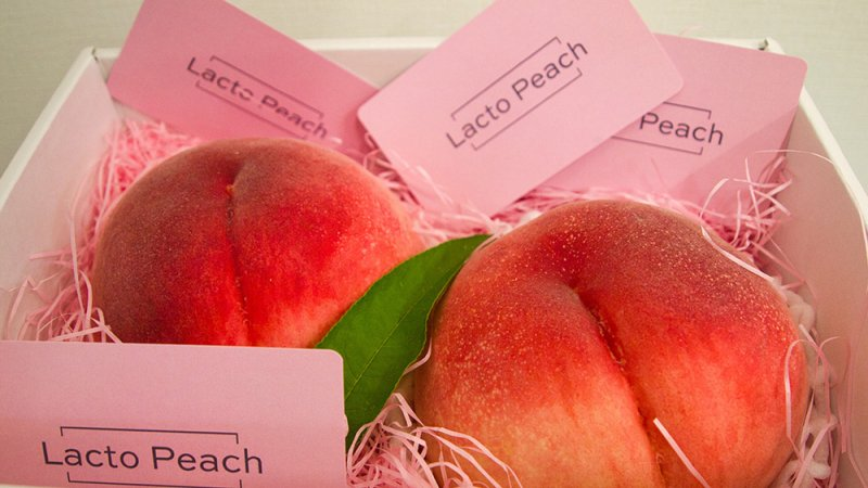 あら川の桃プレミアムブランド【Lacto Peach(ラクトピーチ)】