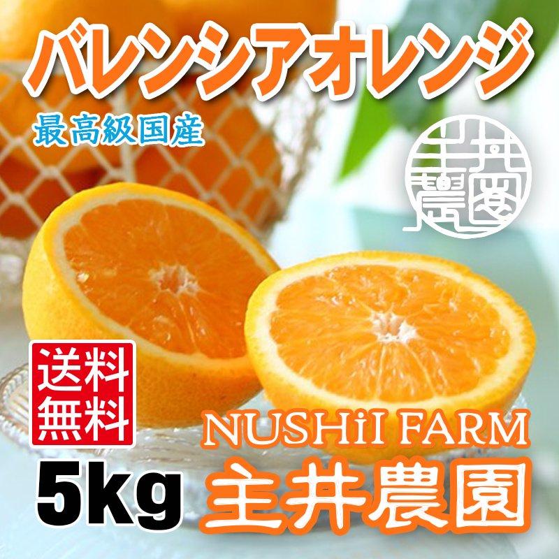 主井農園 バレンシアオレンジ