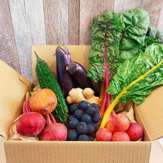 ★千葉行動 開催記念★【野菜BOX】夏の彩り野菜と果物セット!!