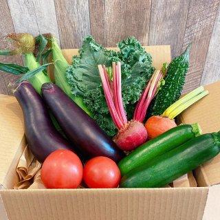 ★千葉行動 開催記念★【野菜BOX】大特価!!夏の彩り野菜セット!!【数量限定】