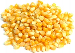 ポップコーン(トウモロコシの種)【1kg】【豆・ビーンズ】