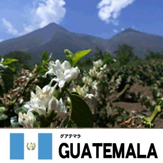 【ネット限定】【スペシャリティコーヒー】SHBグアテマラ メディナ農園の商品画像