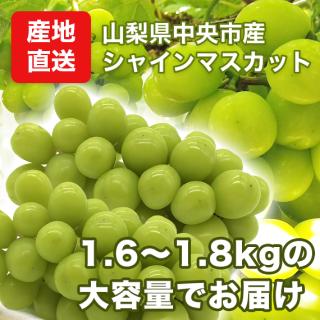 【産地直送】山梨県産 大粒シャインマスカット1.6�〜1.8kg(2房〜3房入り)