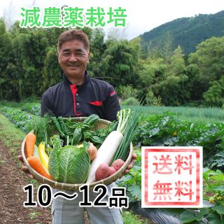 【販売休止中】直送!岡野ファーム 旬の新鮮野菜セット