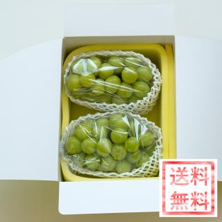 【予約販売商品】シャインマスカット(ご家庭用、2〜3房約1.2kg) ※送料無料